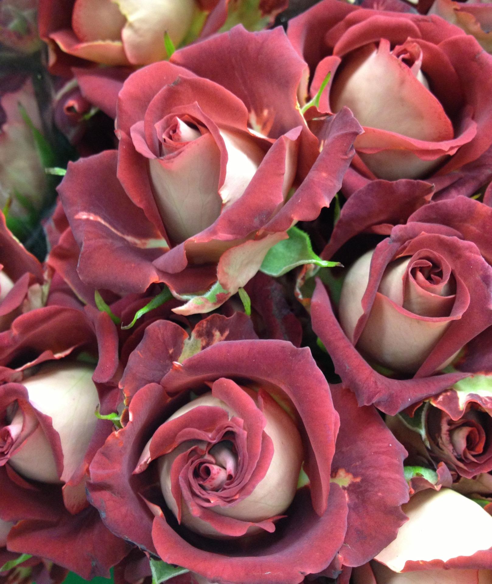 хичову роза спрей что это такое фото встречи улице